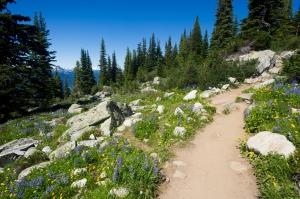 Rocky_Hiking_Trail_Summer